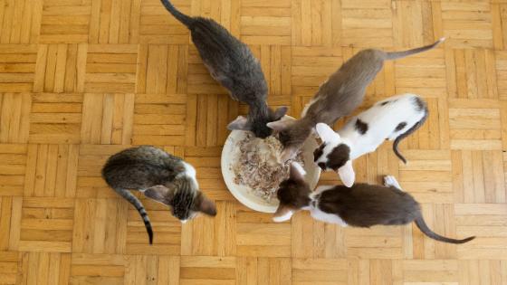 Blog Banner 10 Foods that are toxic to cats