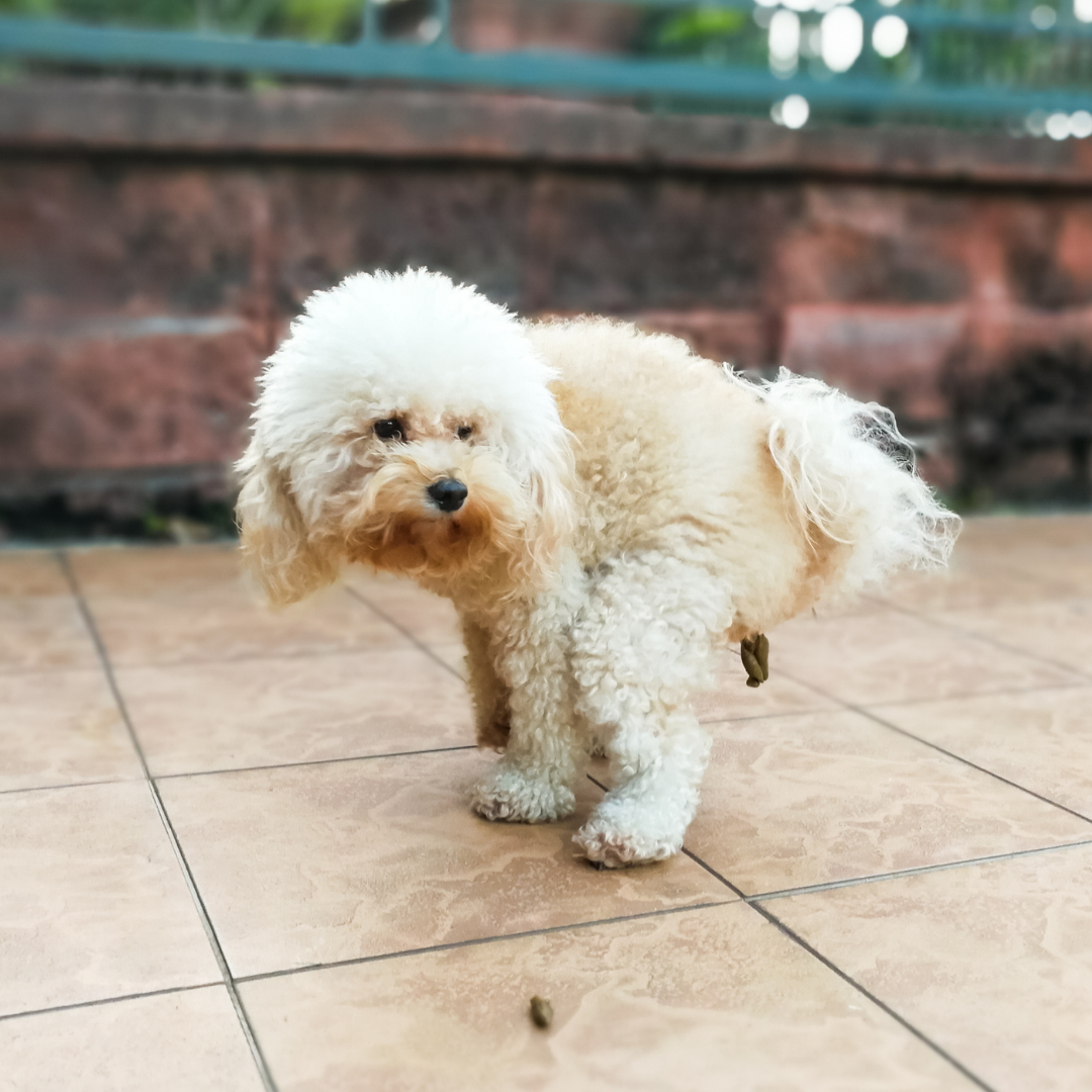 Back to School: Separation Anxiety In Your Dog